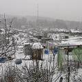 rosenberg-im_winter